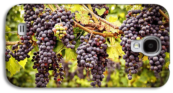 Blue Grapes Galaxy S4 Cases - Red grapes in vineyard Galaxy S4 Case by Elena Elisseeva