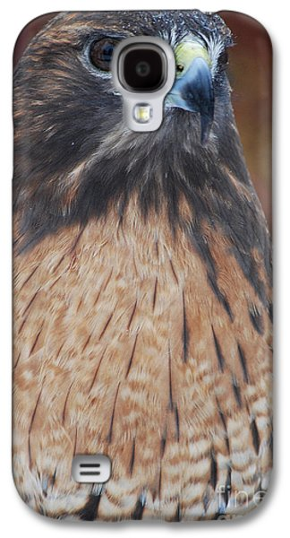 Preditor Galaxy S4 Cases - Red Hawk II Galaxy S4 Case by Sharon Elliott