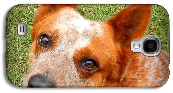 Canine Greeting Cards Digital Galaxy S4 Cases - Red Heeler Galaxy S4 Case by Lynn Griffin