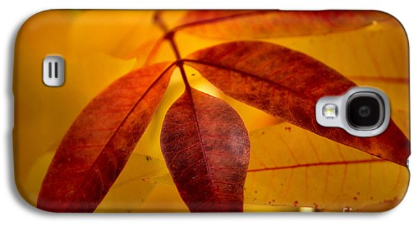 Nature Abstracts Galaxy S4 Cases - Red Leaves at Dawn Galaxy S4 Case by Deb Halloran