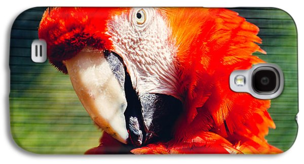 Red Macaw Closeup Galaxy S4 Case by Pati Photography