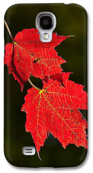 Photo Manipulation Photographs Galaxy S4 Cases - Red Maple in Fall Galaxy S4 Case by Bill Caldwell -        ABeautifulSky Photography