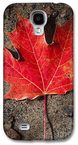 Autumn Foliage Photographs Galaxy S4 Cases - Red maple leaf in water Galaxy S4 Case by Elena Elisseeva