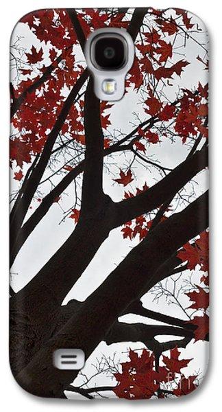 Maple Season Galaxy S4 Cases - Red Maple Tree Galaxy S4 Case by Ana V  Ramirez