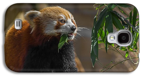 Feeding Galaxy S4 Cases - Red Panda Cafeteria Galaxy S4 Case by Chris Fletcher