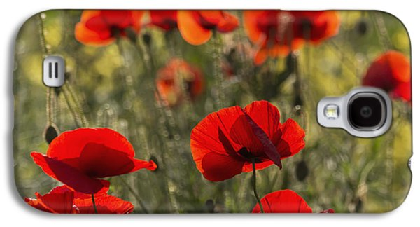 Close Focus Nature Scene Galaxy S4 Cases - Red Poppy _papaver Rhoeas__ Upper Rhine Galaxy S4 Case by Carl Bruemmer