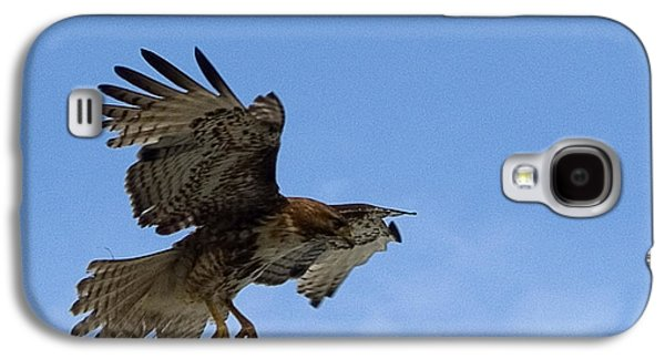 Preditor Galaxy S4 Cases - Red Tail Hawk Galaxy S4 Case by Bill Gallagher
