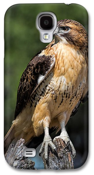 Red Tail Hawk Galaxy S4 Cases - Red Tail Hawk Portrait Galaxy S4 Case by Dale Kincaid