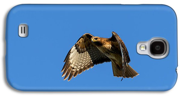 Red Tail Hawk Galaxy S4 Cases - Red-Tail Hover Galaxy S4 Case by Mike  Dawson