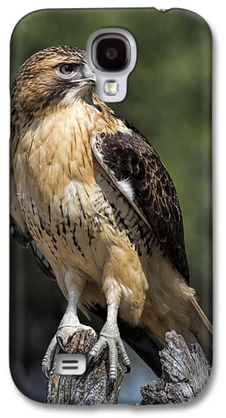 Red Tail Hawk Galaxy S4 Cases - Red Tailed Hawk Galaxy S4 Case by Dale Kincaid