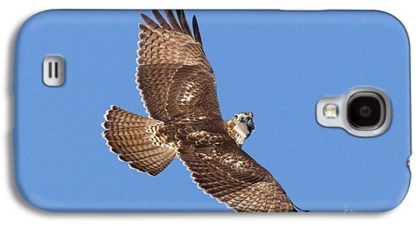 Us Wildllife Galaxy S4 Cases - Red-tailed Hawk Galaxy S4 Case by Jim Zipp