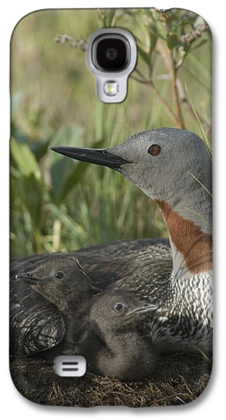 Three Chicks Galaxy S4 Cases - Red-throated Loon With Day Old Chicks Galaxy S4 Case by Michael Quinton