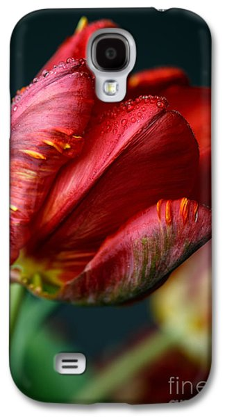 Studio Photographs Galaxy S4 Cases - Red Tulip with Dew Galaxy S4 Case by Nailia Schwarz