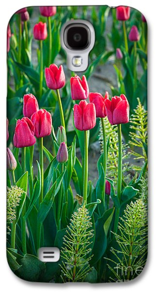 Agronomy Galaxy S4 Cases - Red tulips in Skagit Valley Galaxy S4 Case by Inge Johnsson