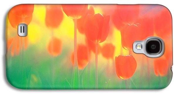 Close Focus Nature Scene Galaxy S4 Cases - Red Tulips Galaxy S4 Case by Panoramic Images