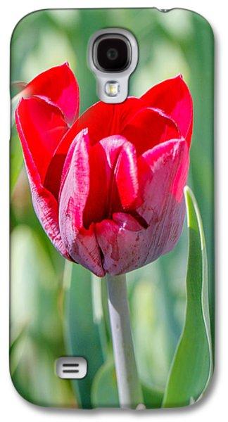 Cheekwood Galaxy S4 Cases - Red Tulip Galaxy S4 Case by Robert Hebert