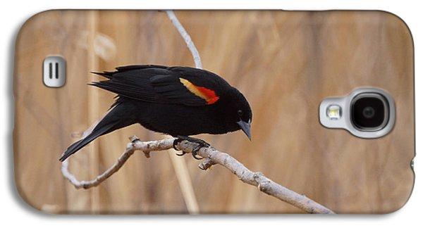Red Winged Blackbird 1 Galaxy S4 Case by Ernie Echols
