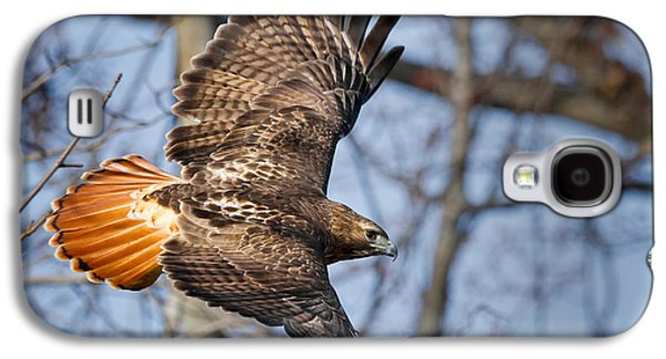 Red Tail Hawks Galaxy S4 Cases - Redtail Hawk Galaxy S4 Case by Bill  Wakeley