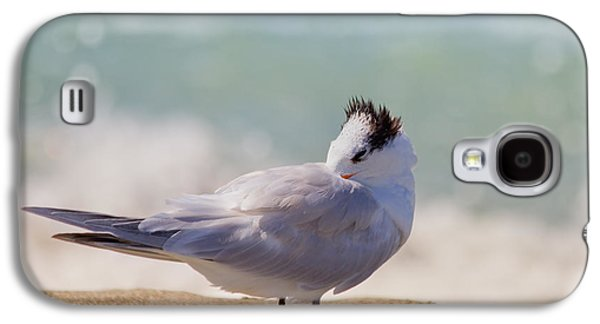 Tern Galaxy S4 Cases - Resting at the Beach Galaxy S4 Case by Kim Hojnacki