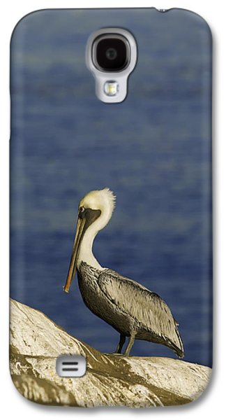 Sun Rays Galaxy S4 Cases - Resting Pelican Galaxy S4 Case by Sebastian Musial