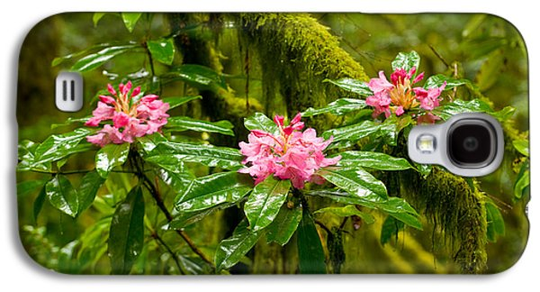 Close Focus Nature Scene Galaxy S4 Cases - Rhododendron Flowers In A Forest Galaxy S4 Case by Panoramic Images