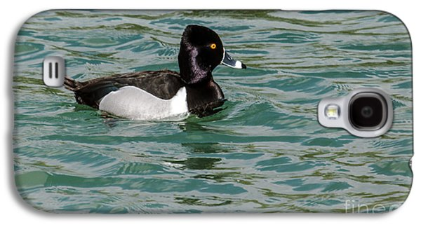Haybale Galaxy S4 Cases - Ring-Necked Duck Galaxy S4 Case by Robert Bales
