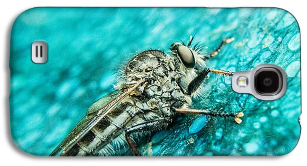 Preditor Galaxy S4 Cases - Robber Fly on Blue Ceraminc Plate 1 Galaxy S4 Case by Douglas Barnett