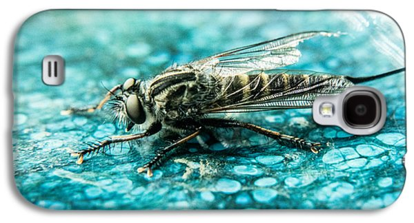 Preditor Galaxy S4 Cases - Robber Fly pm Blue Ceramic Plate Galaxy S4 Case by Douglas Barnett