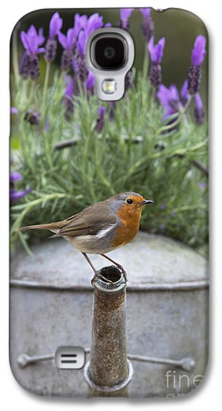 Fauna Photographs Galaxy S4 Cases - Robin Galaxy S4 Case by Tim Gainey