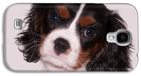 Puppies Galaxy S4 Cases - Rockys portrait Galaxy S4 Case by Photos By  Cassandra