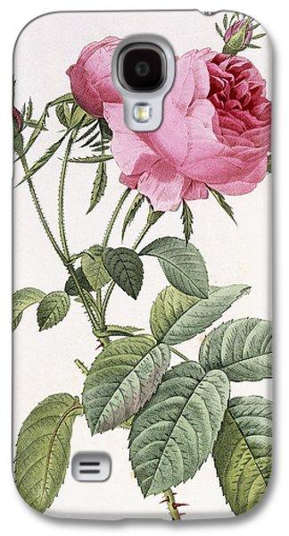 Reproduction Galaxy S4 Cases - Rosa centifolia foliacea Galaxy S4 Case by Pierre Joseph Redoute