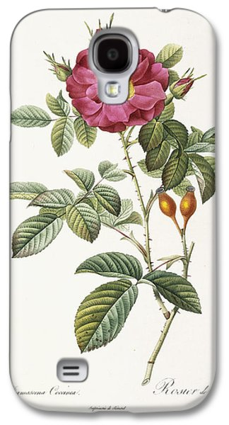 Early Spring Paintings Galaxy S4 Cases - Rosa Damascena Coccina Galaxy S4 Case by Pierre Joseph Redoute