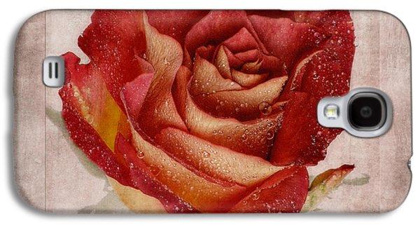 Floribunda Galaxy S4 Cases - Rosa Floribunda Rainbow Sorbet Galaxy S4 Case by John Edwards