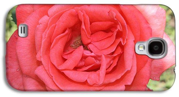 Botanical Galaxy S4 Cases - Rose at Clark Gardens Galaxy S4 Case by John Telfer