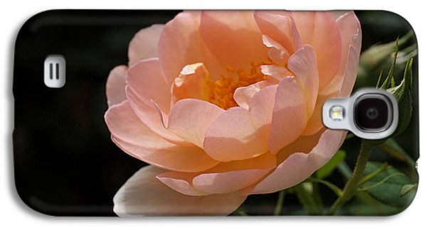 Botanical Galaxy S4 Cases - Rose Blush Galaxy S4 Case by Rona Black