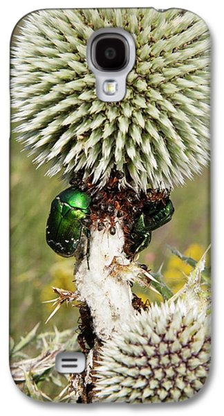 Rose Chafers And Ants On Thistle Flowers Galaxy S4 Case by Bob Gibbons