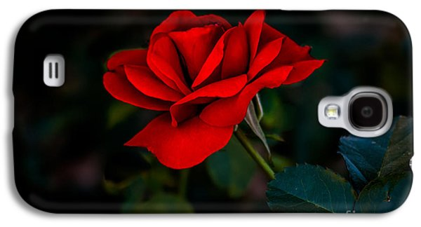 Haybale Galaxy S4 Cases - Rose Is A Rose Galaxy S4 Case by Robert Bales