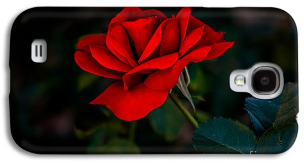 Rosaceae Galaxy S4 Cases - Rose Is A Rose Galaxy S4 Case by Robert Bales