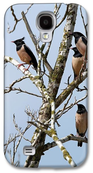 Rosy Starling (sturnus Roseus) Galaxy S4 Case by Photostock-israel