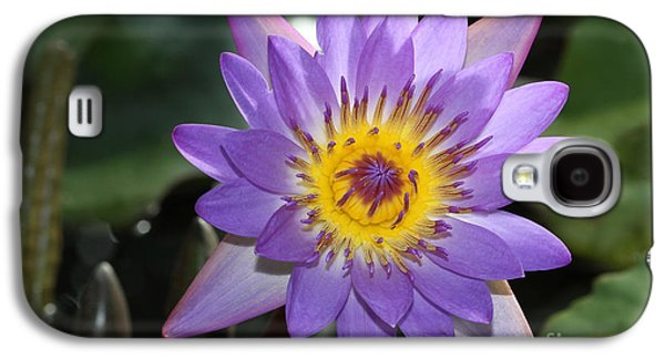Botanical Galaxy S4 Cases - Royal Purple Water Lily #9 Galaxy S4 Case by Judy Whitton