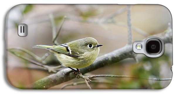 Ruby-crowned Kinglet Galaxy S4 Case by Christina Rollo