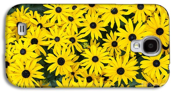 Abstracted Coneflowers Galaxy S4 Cases - Rudbeckia Fulgida Pot Of Gold  Galaxy S4 Case by Tim Gainey