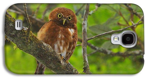 Morph Galaxy S4 Cases - Rufous Morph Costa Rican Pygmy-Owl Galaxy S4 Case by Tony Beck