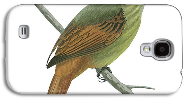 Feather Drawings Galaxy S4 Cases - Rufous tailed flatbill  Galaxy S4 Case by Anonymous