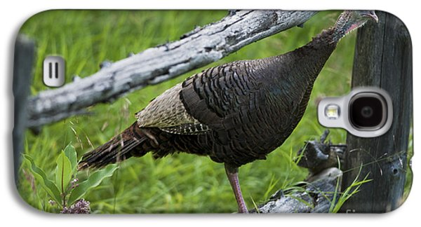 Wild Turkey Galaxy S4 Cases - Rural Adventure Galaxy S4 Case by Nina Stavlund
