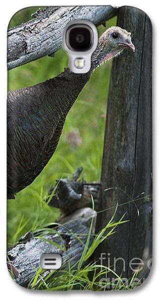 Wild Turkey Galaxy S4 Cases - Rural Adventure Galaxy S4 Case by Nina Stavlund