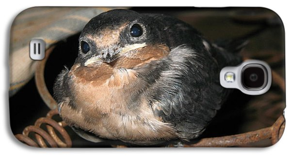 Hirundo Rustica Galaxy S4 Cases - Rusted Perch - Baby Barn Swallow  Galaxy S4 Case by Christena  Stephens