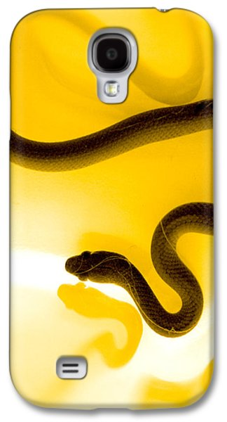 Animal Galaxy S4 Cases - S Galaxy S4 Case by Holly Kempe