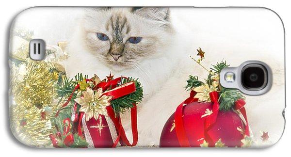Breed Digital Art Galaxy S4 Cases - Sacred Cat of Burma CHRISTMAS TIME II Galaxy S4 Case by Melanie Viola
