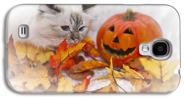 Breed Digital Art Galaxy S4 Cases - Sacred Cat of Burma HALLOWEEN Galaxy S4 Case by Melanie Viola